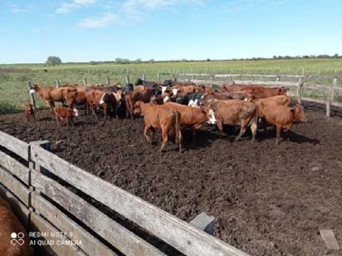 Cepo a la carne: el paro del campo seguirá hasta el miércoles