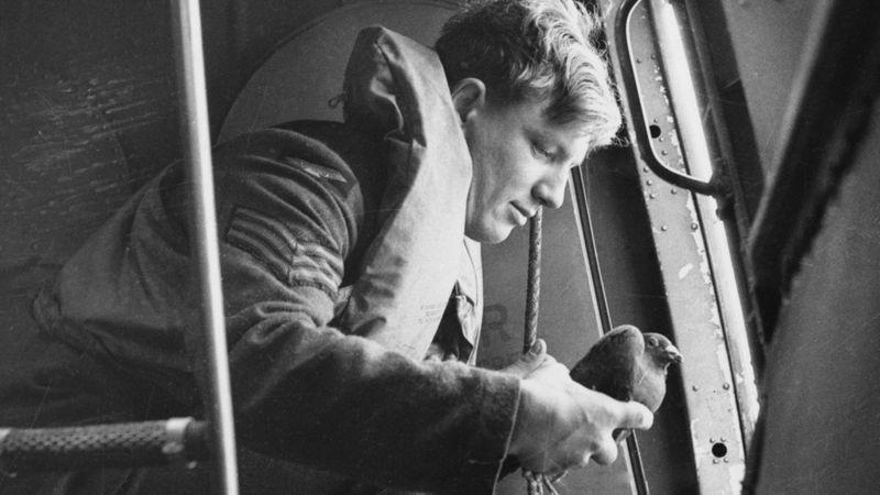 Columba: la ingeniosa operación con palomas mensajeras para espiar a los nazis