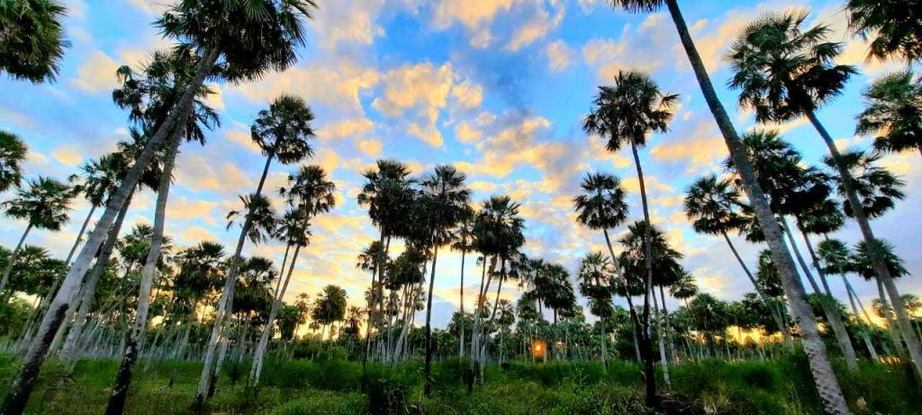 Conservación de la biodiversidad: hacia la creación del tercer parque nacional del Chaco
