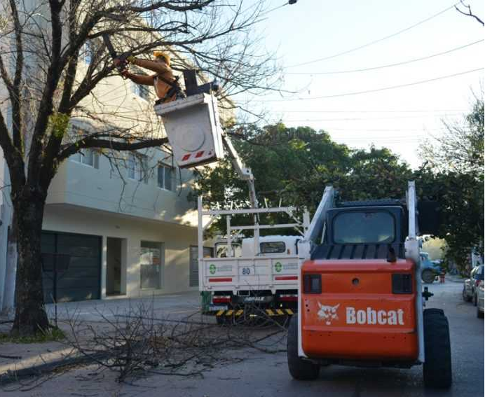 Nuevo operativo municipal de poda controlada en Resistencia