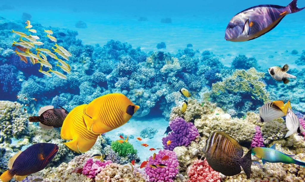 La Gran Barrera de Coral, en la lista de patrimonio de la humanidad