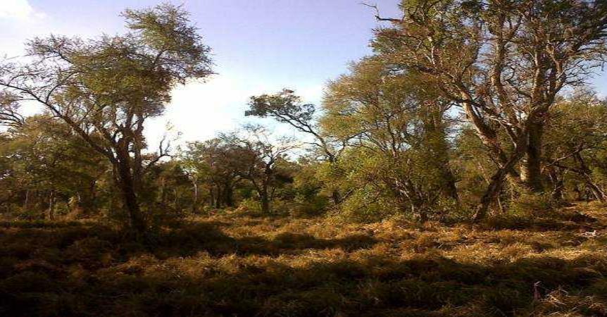 Curso online: animadores Forestales para el Chaco Austral