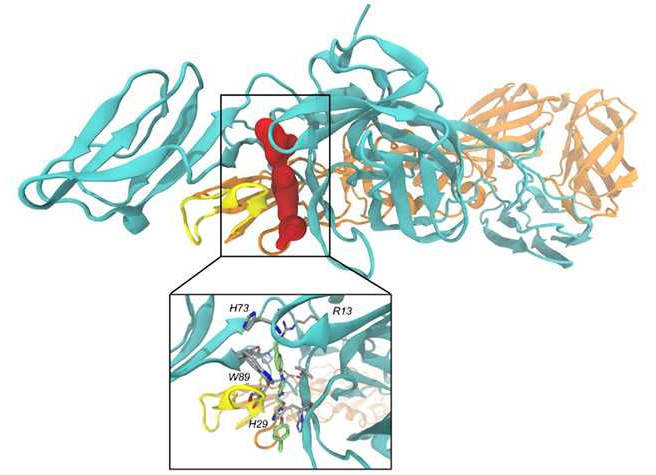 Chikungunya: hallan punto de partida para el desarrollo de un medicamento