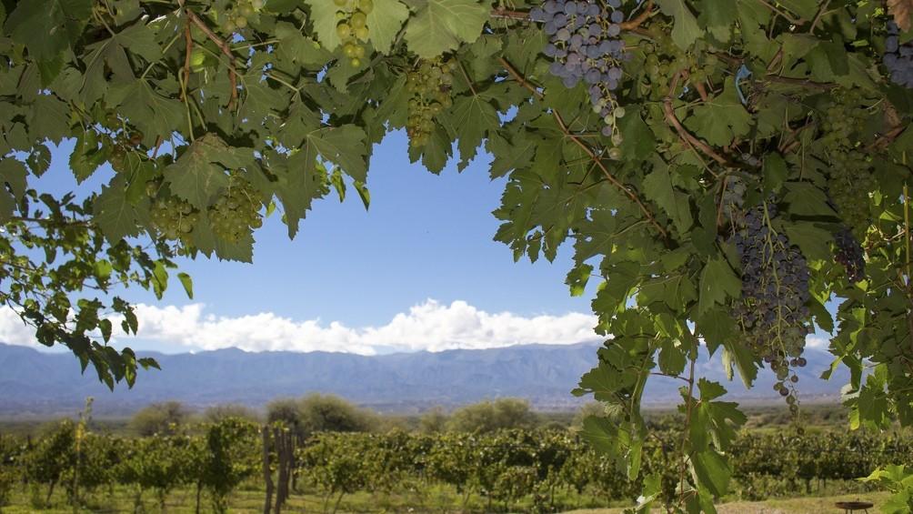 Proponen un Camino del Vino con 14 bodegas a lo largo de 100 kilómetros