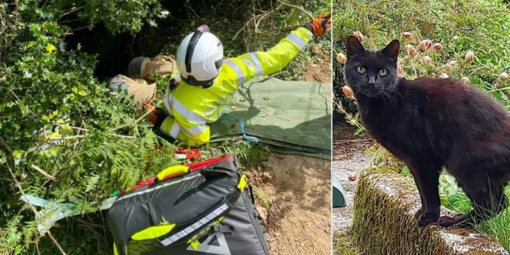 Cayó por un barranco pero los maullidos de su gato le salvaron la vida