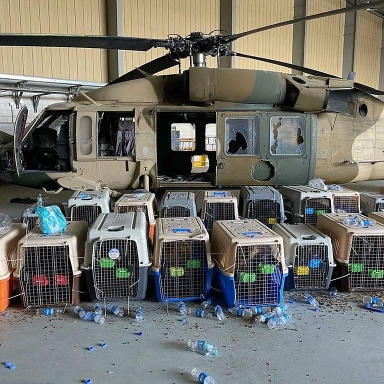 El Pentágono negó haber abandonado a sus perros en el aeropuerto de Kabul