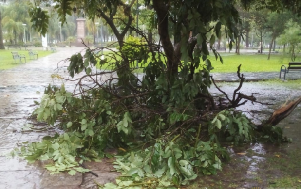 La tormenta en Resistencia alcanzó ráfagas de viento de 82 km/h